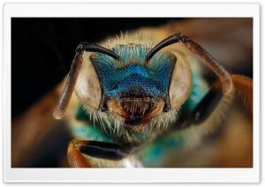 Blue Green Metallic Bee,...
