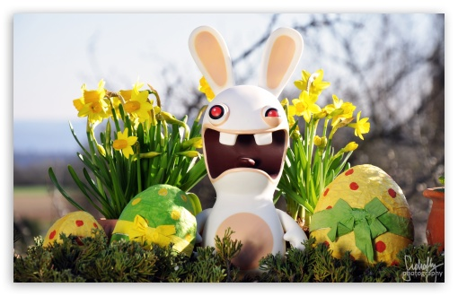 Download Funny Easter Bunny UltraHD Wallpaper