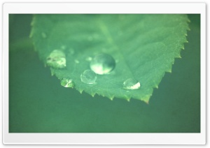 Leaf Super Macro