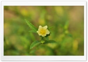 Flower_Yellow