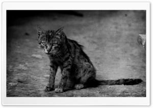 Tramp Cat