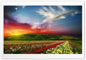 Rose Flower Field Background HD