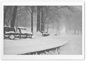 Snow Falling Black and White