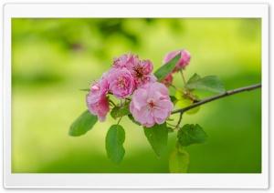 Blooming Tree, Spring, Fresh...
