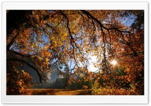 Sun Shining Through Tree...