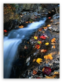 Download Creek Autumn UltraHD Wallpaper