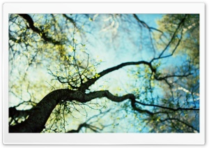 Branches Spring