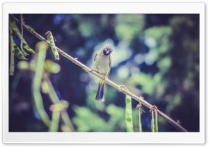 Bird Ku Resimleri