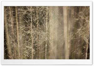 Wispy Grass