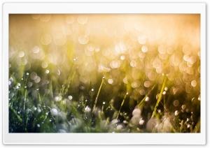 Grass Dew, Bokeh