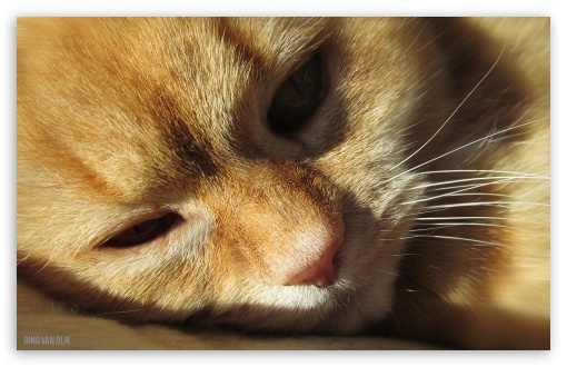 Download Cat UltraHD Wallpaper