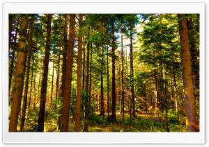 Forest Gorski Kotar