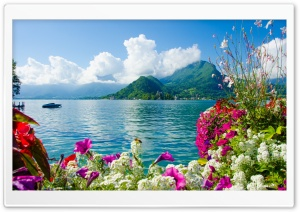 Topical Island