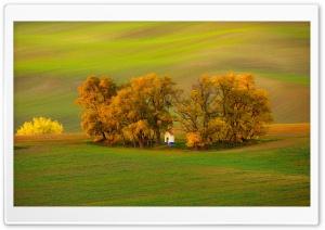 Wavy Land, Trees, Autumn...