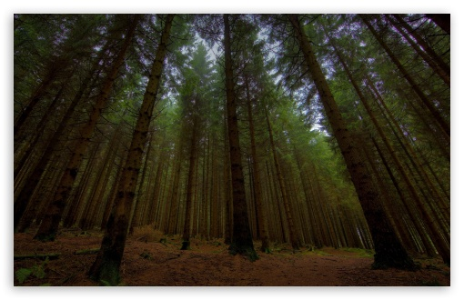 Download Beautiful Forest UltraHD Wallpaper