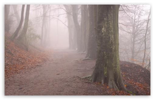 Download Forest Fog, Autumn UltraHD Wallpaper