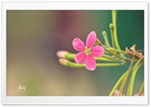 Pink Small Flower