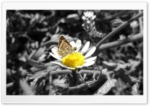Daisy and Butterfly