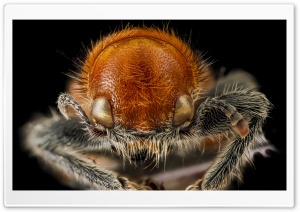 Beetle Macro Photography