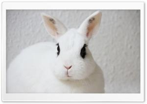 White Bunny, Black Eyes