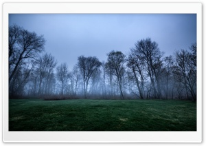 Dark Woods, Trees, Fog, Green...
