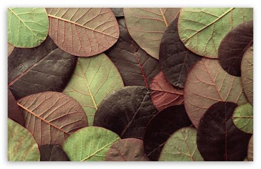 Download Leafy Pattern UltraHD Wallpaper