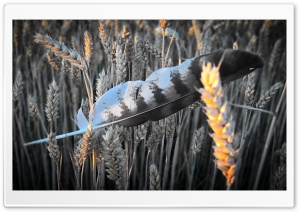 Feather in Field