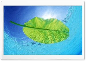 Blue Waters Of A Green Leaf