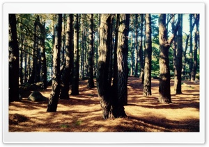 Bretagne Forest