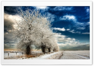 White Frozen Trees