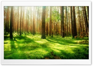Beautiful Forest Scenery
