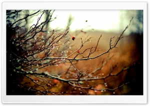Wet Branches