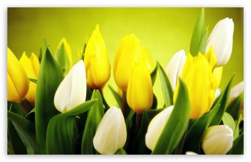 Download Spring Flowers UltraHD Wallpaper