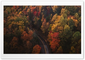 Travel, Road, Forest, Autumn