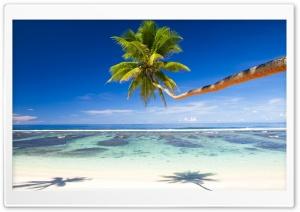 Palm Tree Over Tropical Beach