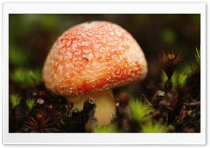 Orange Mushroom Macro