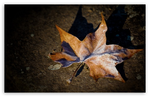 Download Frosted Leaf UltraHD Wallpaper