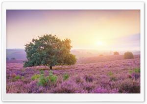 Beautiful Landscape Sunrise