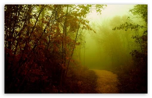 Download Misty Path UltraHD Wallpaper