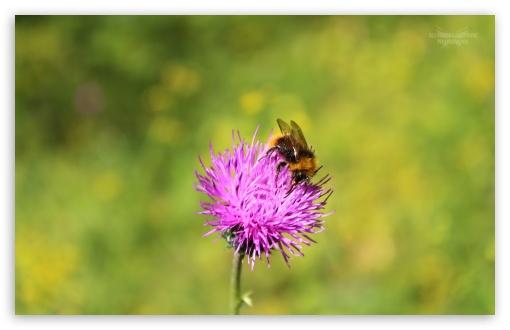 Download Bumblebee UltraHD Wallpaper