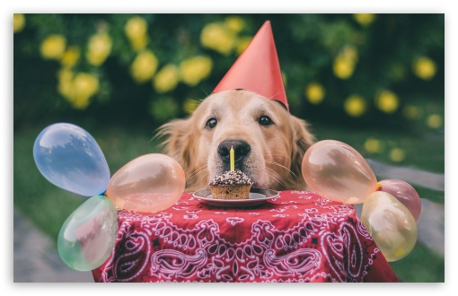 Download Cute Dog Birthday UltraHD Wallpaper