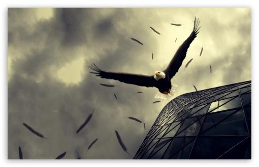 Download Bald Eagle Flying UltraHD Wallpaper