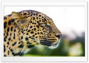 Big Cat Leopard Portrait Side...