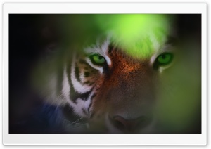 Tiger Ambush