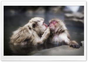 A Gentle Kiss