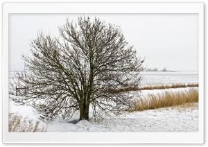 Field Tree, Winter