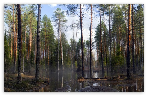 Download Forest Mist at Morning UltraHD Wallpaper