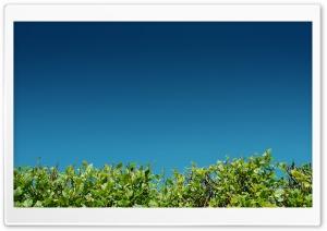 Green Bushes Against A Blue Sky