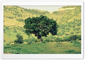 Kurdistan-Nature