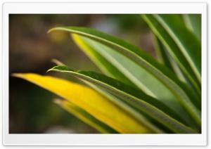 Plant Leaf Bokeh